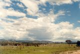 NW of Tenterfield 1.37pm